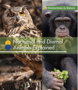nocturnal-and-diurnal-animals-explained-cover